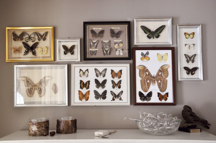 My butterfly collection, found them on auctions online :)