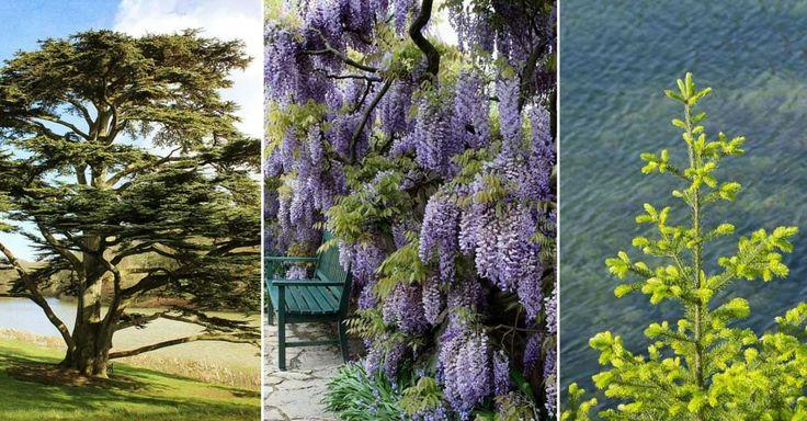 Symbolika stromů rostoucích na zahradě i v přírodě