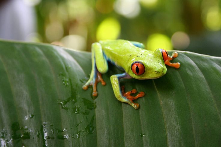 Tips voor natuurfotografie: tropische beestjes · Lomography