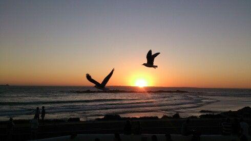 Seagulls at sunset. Bloubergstrand