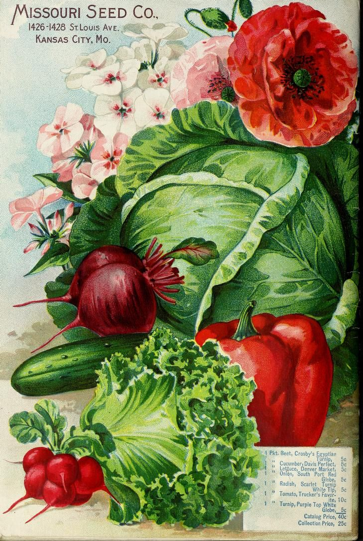 5280 Best Vintage Seed Packets And Catalogs Images On Pinterest