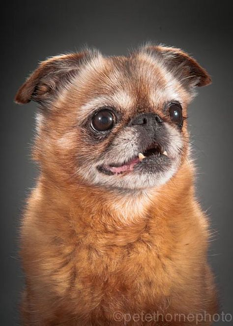 Adorable Photo Series About Really Old Dogs