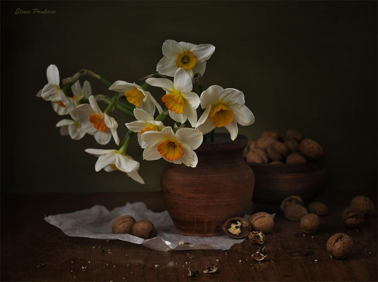 Daffodils and walnuts by Elena Pankova
