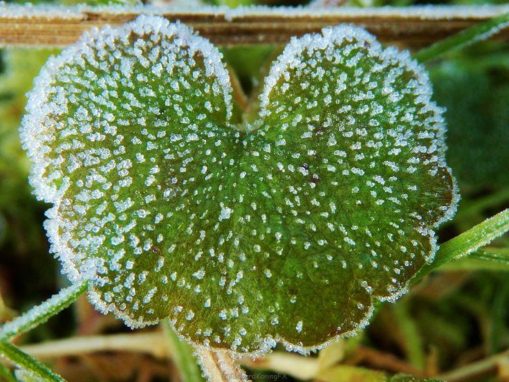 Groen hartje met vorst kristallen Green hart shaped lead with white cristals
