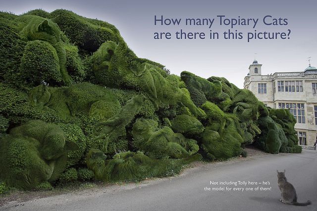 Audley End has a very long abstract 'cloud' type topiary along the drive. I've hidden fourteen Topiary Cats in there. Can you spot them all?: