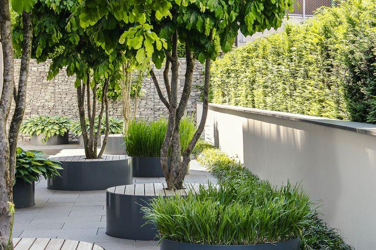 eine gute Idee, Pflanztröge gleichzeitig als Sitzmöbel zu nutzen. Schirmförmig geschnittene Sträucher (hier: Parrotia persica) lassen hierfür Platz und schütezn vor der prallen Sonne.