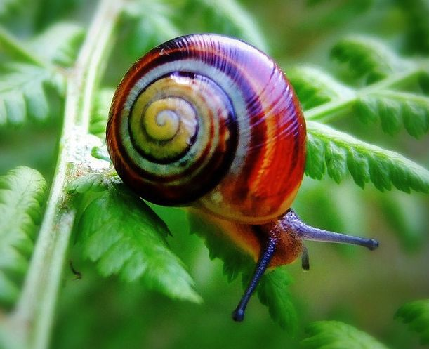 Colors Snails, Nature, Natural Beautiful, Land Snails, Cuban Land, Cities Life, Amazing