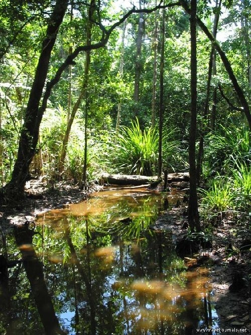 Australian Rainforest.. the most peaceful place I have ever been
