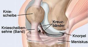 Effektives Krafttraining für das Knie Kurt Moll