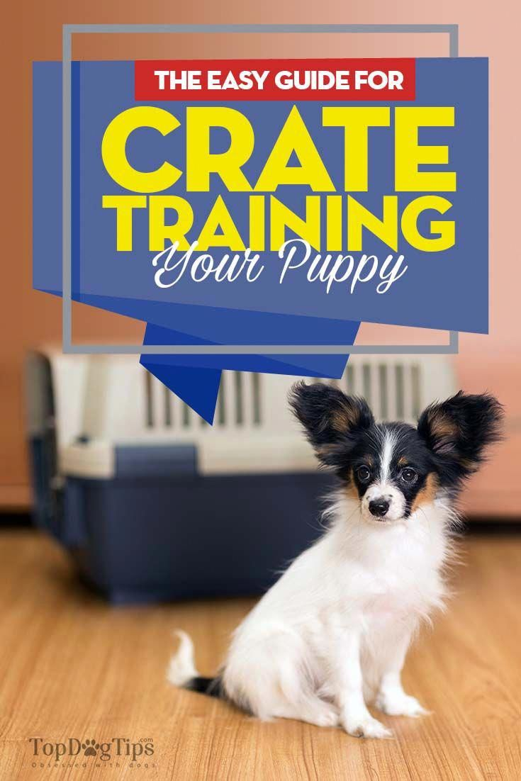 The Idea Of Crate Training Is Frequently Thrown Around By Dog