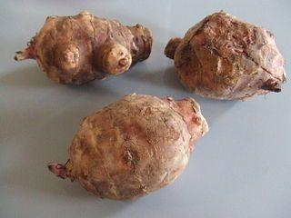 Natürliche Appetitzügler Topinambur