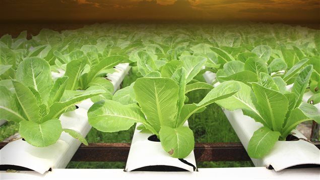 Agricultura hidropónica, una opción ecológica y sostenible de la mano de la tecnología