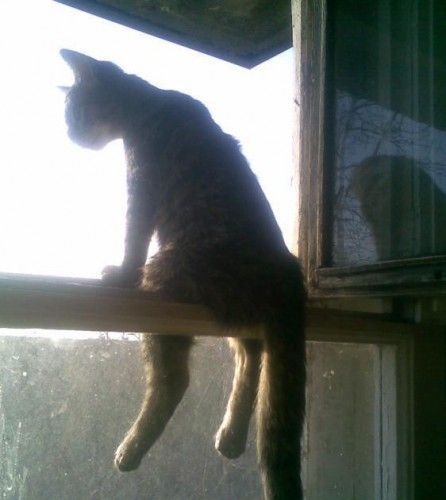 Ha!: Funny Animal Videos, Funny Kitty, Funny Cat, Bays, The View, Crazy Cat, Windows, So Funny, Silly Cat