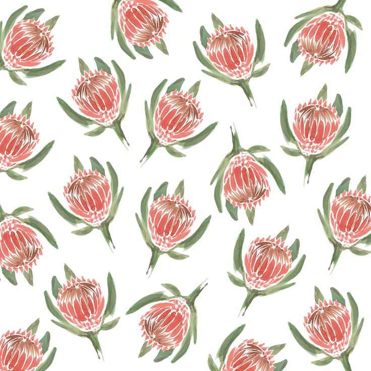 Protea print on white // Sarah Jager Design #protea #southafrican #flower