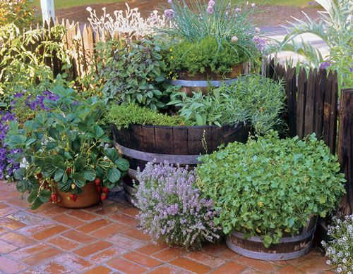 Double-barrel Herb Garden:  Must-have herbs that do well in most of the country. A smaller barrel (with chives, winter savory, and thyme) nests atop an outsized whiskey barrel with 'Thai' and sweet basils, oregano, lemon thyme, French tarragon, and sage.      Read more: http://www.herbcompanion.com/in-the-herb-garden/double-barrel-herb-garden-ze0z1011zdeb.aspx#ixzz1s8d0JX8E