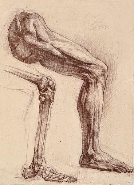 Relación estructura ósea anatomía