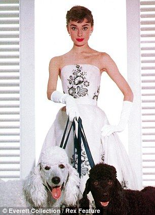 Audrey Hepburn with black & white poodles