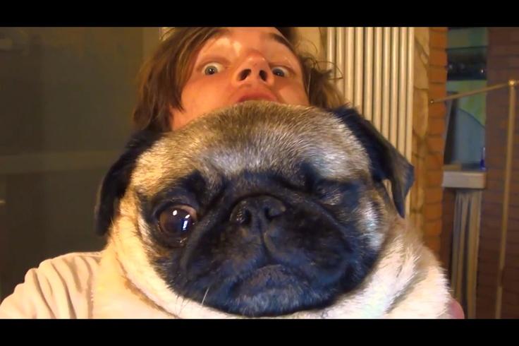 Felix Kjellberg and his pug | PewDiePie | Pinterest | Lady ...