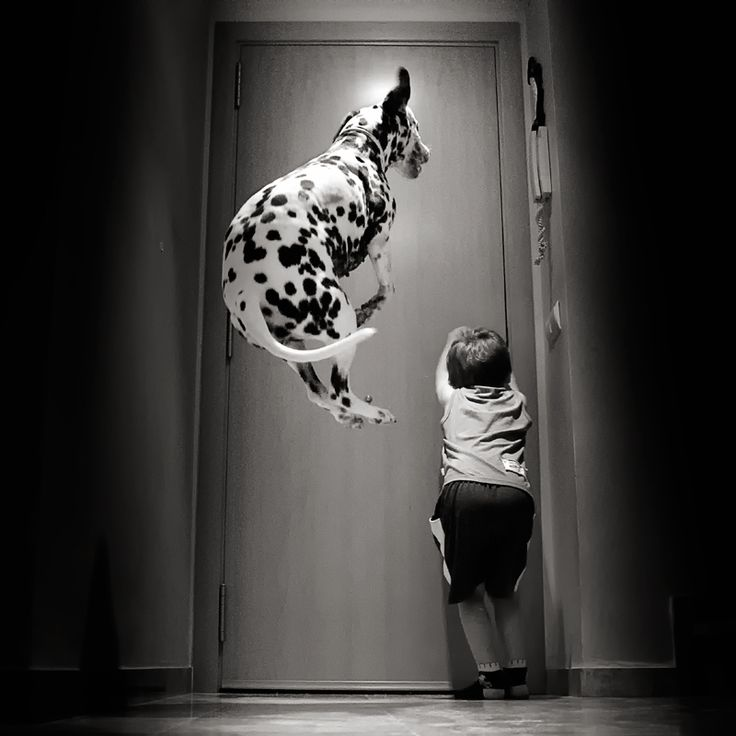 Oh please let me in!!!!!!!Photos, The Doors, Puppies, Walks, Pets Memories, Happy Dogs, Dalmatians, Big Dogs, Animal