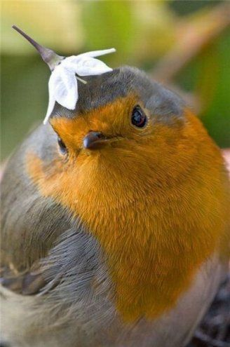 Funny Robin with a Little Flower Bonnet on her Head