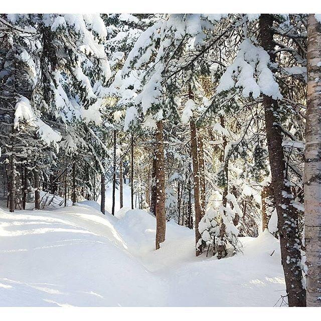 De l'or blanc sur nos montagnes de glisse! : @jftremblay00 #MonCharlevoix #Charlevoix #LeMassif #funbrut @lemassif #ski #winter #snow #powder #nature #forest #landscape #travel #explorecanada #quebecoriginal by charlevoixatr