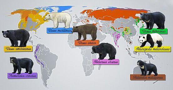 Distribución geográfica de las ocho especies de osos en el planeta