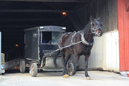 Mennonite winter buggy crossing the covered bridge at West Montrose, Ontario, Canada