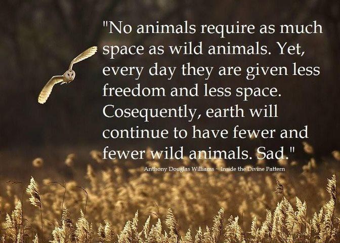 Czeshop Images Abused Animals Quotes