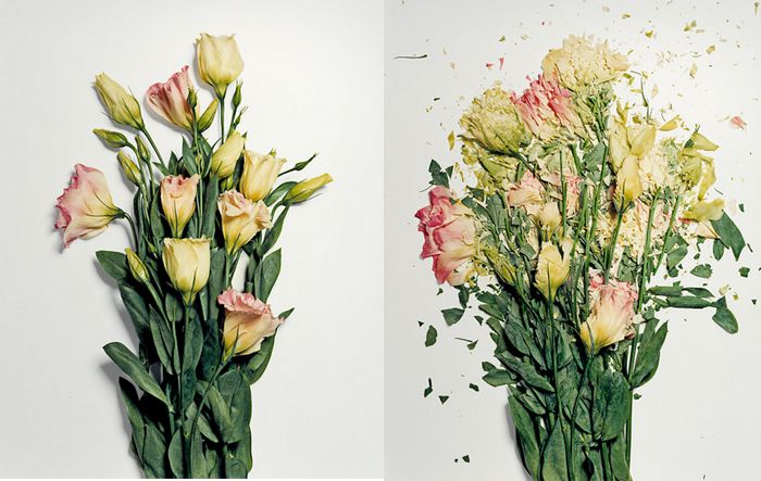 Shattered Floral Photography: Flowers Soaked in Liquid Nitrogen Smash Into Pieces   Jeannie Huang
