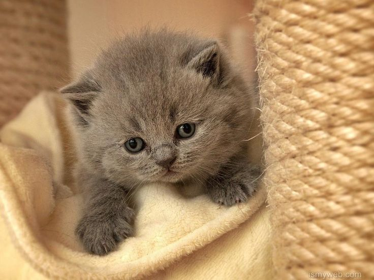 Wallpaper 774 pinterest cute cat desktop wallpaper download 5 voltagebd Images