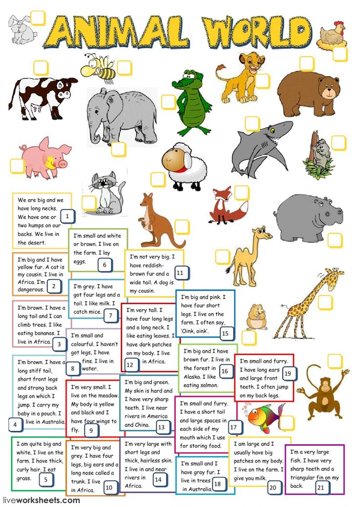 The animals interactive and downloadable worksheet. You