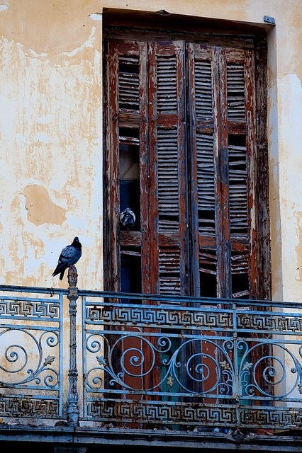 Bird in Poros, Greece by Eyebeam Photography