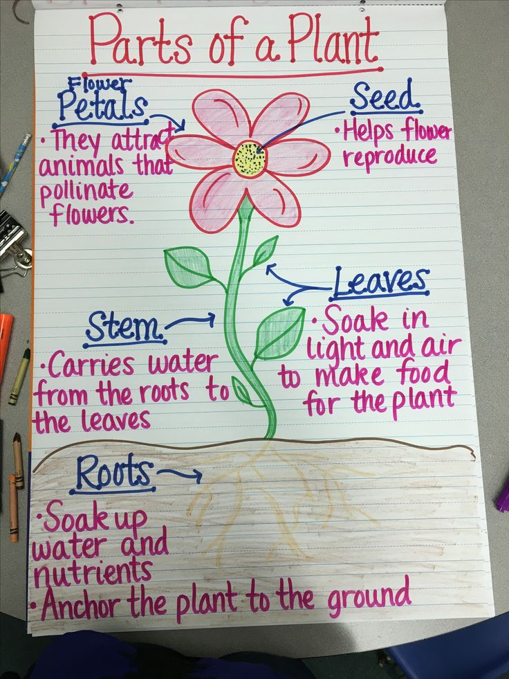 Parts of a Plant Anchor Chart                                                                                                                                                                                 More