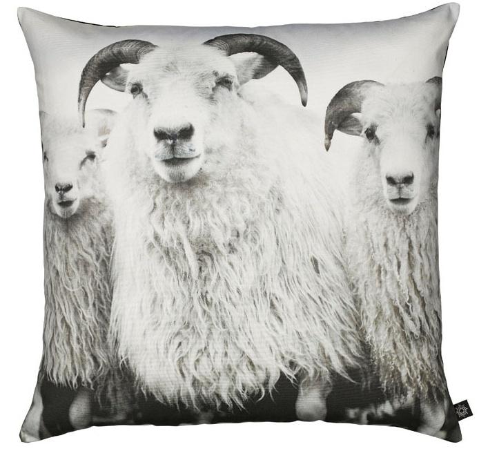 Sheep pillow from hviit.no60X60 Komplett, Rams Cushions, Nord Pute, Pute Fotoprint, Sheep 60X60, Nord Puding, Throw Pillows, Fotoprint Sheep, Sheep Pillows