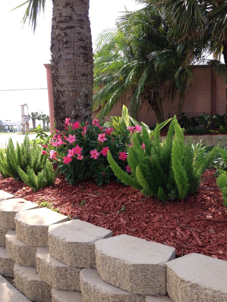 Foxtail Ferns And Dipladenia Front Yard Landscaping