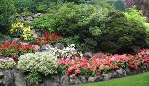 #gardening #flowers