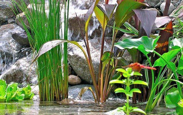 6 правил для водных растений!