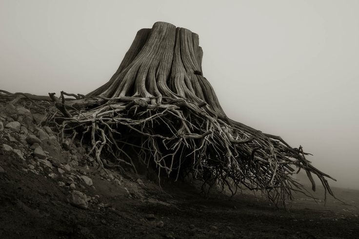 Spooky Tree Stumps Remind Us Why We Need Earth Day | PROOF