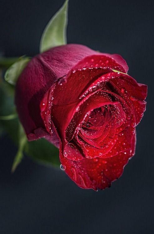 rosa pillolina di Peppa