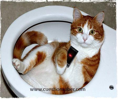 www.cuestionsaber.com  ¿Sabías que?Mientras mas características y aplicaciones tenga tu celular, mas tiempo estarás sentada viéndolo en el baño.