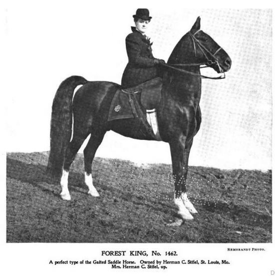 Forest King 1906