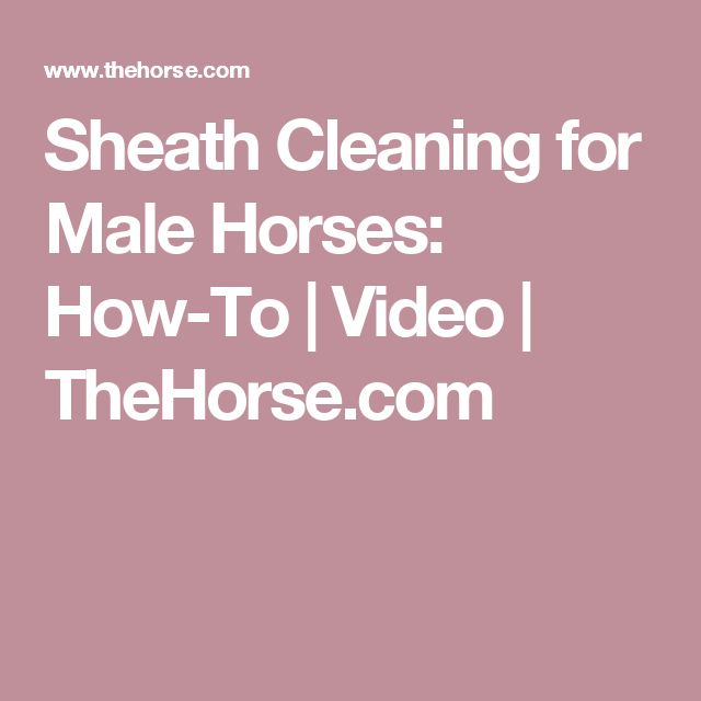 Sheath Cleaning for Male Horses: How-To | Video | TheHorse.com