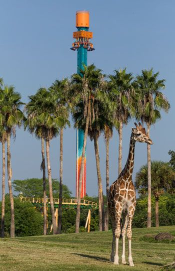 I read this on the CityPASS blog: Free Falling Falcon's Fury Debuts at Busch Gardens Tampa