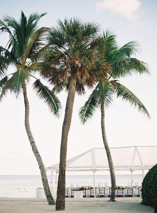 La belle jardin september 2015 for Jardin west palm