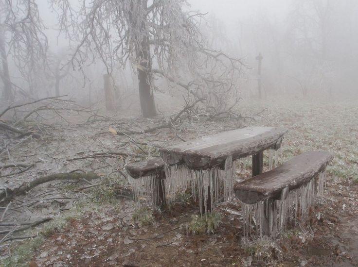 Dans une forêt de Budapest, le 2 décembre.