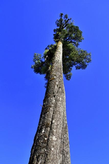 Old tree, Taranaki, New Zealand by brian nz, via Flickr