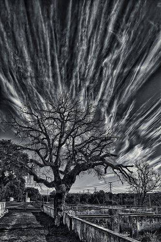 Magic tree dramatic tree and cloud scape mono by wendy rauw