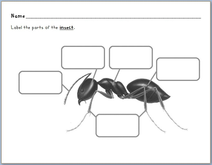 simple diagram of an ant