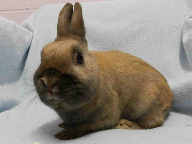 Cocoa is available at PetSmart at 835 Eglinton Ave E