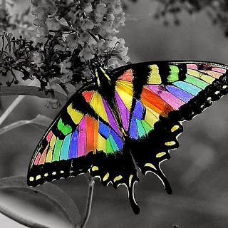 "The colors on this beauty... like the rainbow.  This website is in a different language, so I do not know the name of this butterfly.  What a stunning creature under any moniker!!    ""Las Fotos Mas Alucinantes"""
